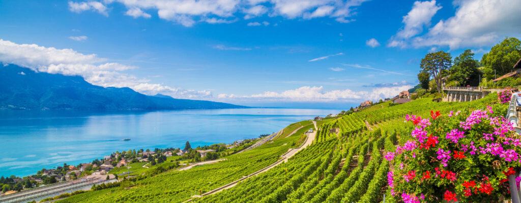 Losanna, capitale del vino