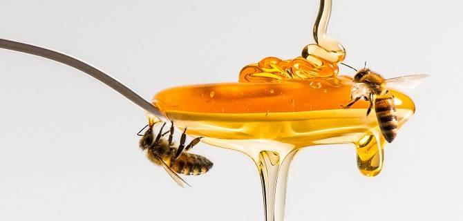 Eventi Fuorisalone 2018: The Joy of Bees