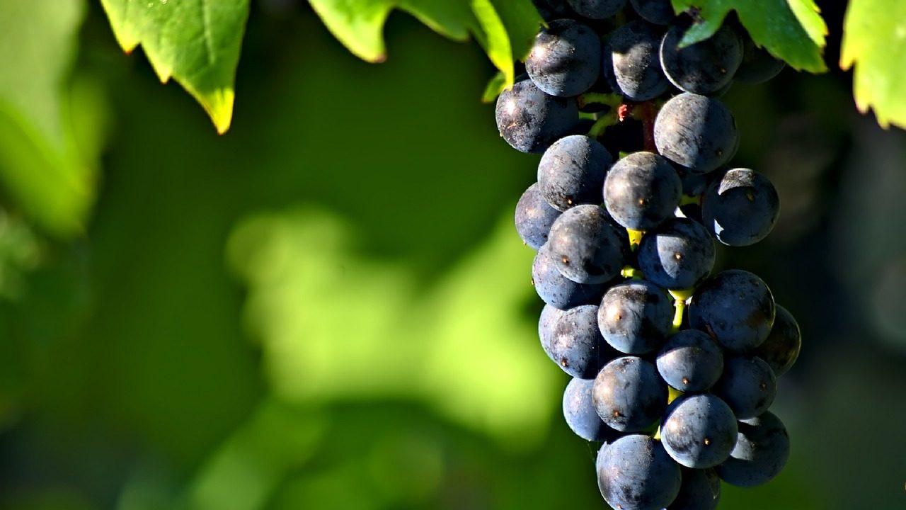 Wine Days Italy