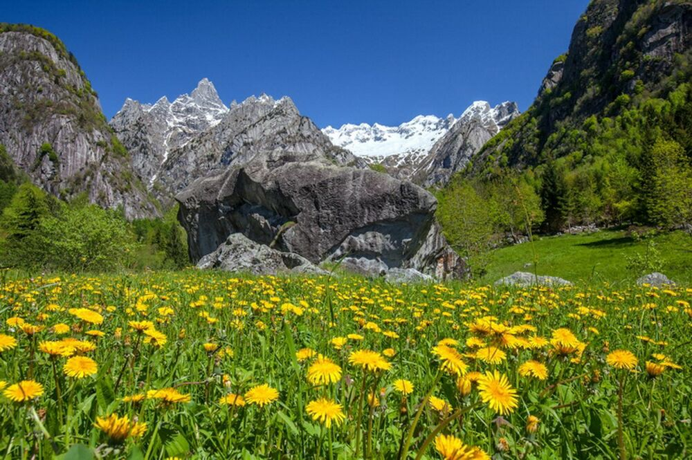 La fioritura primaverile a San Martino, in Valmasino