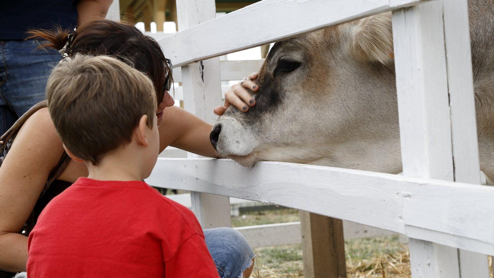 Bambini al Rural Festival 2017 accarezzano una mucca
